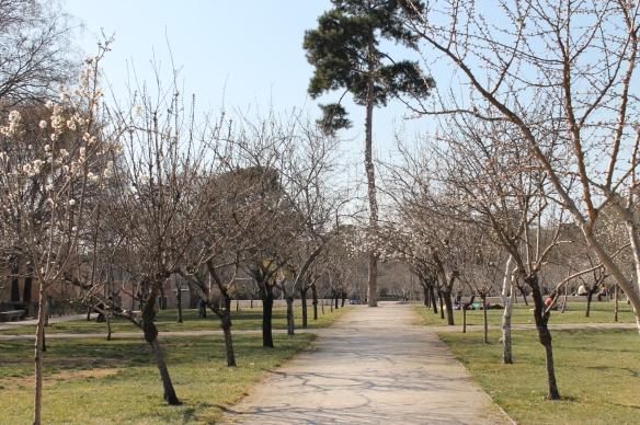 Parque del Retiro. Verde de Madrid